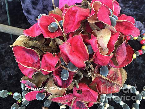 Hawaiian Velvet Seed's And Any Hua Were Weke  by Joseph Mora