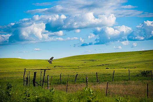 Jeff Phillippi - Hawk and Flint Hills