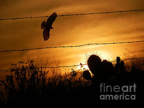 Hawk at Sunset by Robert Ball