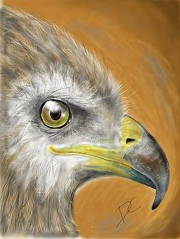 Hawk by Darren Cannell