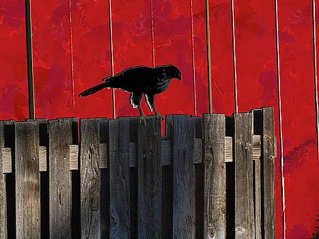 Hawk by Don Gradner