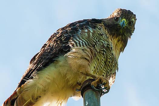 Hawk Eyes by Larry  Goss