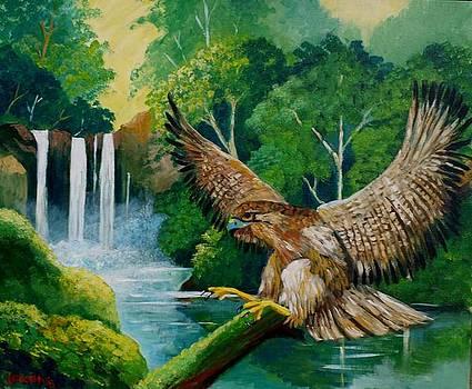 Hawk by Jean Pierre Bergoeing