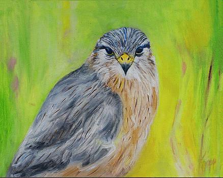Hawk by Kathy Knopp