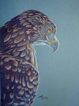Hawk Profile by Angela DeRiso