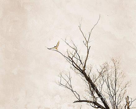 Hawk's Embrace by Sandra Silva