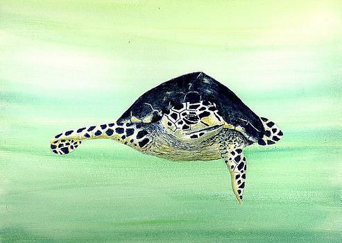 Hawksbill Sea Turtle by Michael Vigliotti