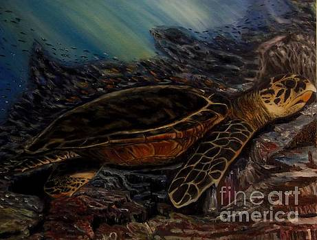 Hawksbill Turtle by Isabel Honkonen