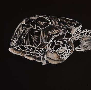 Hawksbill Turtle by Stella Marin