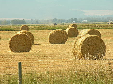 Hay Bails by Diane Greco-Lesser