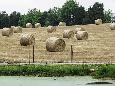 Hay Bales in Summer by Linda A Waterhouse