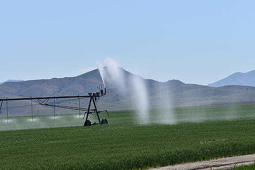 Hay Field Irrigation by Kae Cheatham