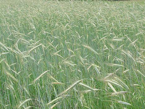 Hay field by Ken Moran