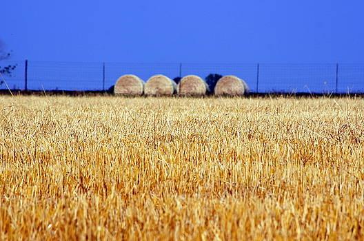 Hay Hay by Debi Demetrion