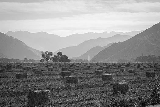 Hay by Roland Peachie