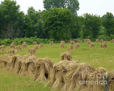 Haystacks by PJ Boylan