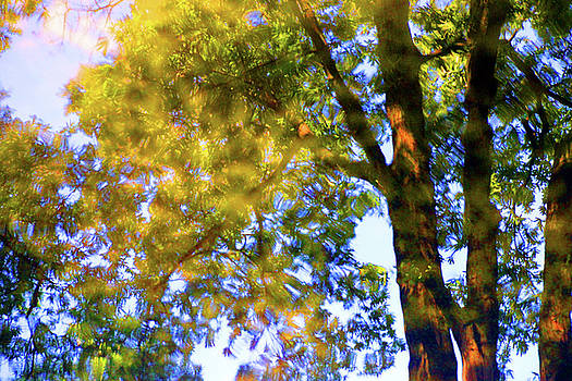 Hazy Green by Carolyn Stagger Cokley