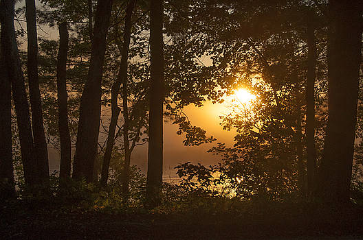 Hazy Morning Sunrise Through the Trees by Donna Doherty