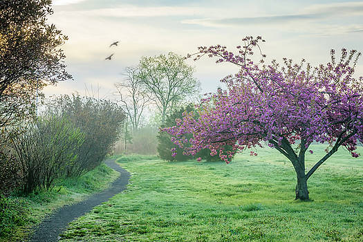 Hazy Spring Morning by June Marie Sobrito