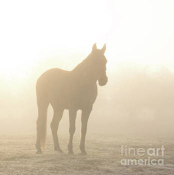 Hazy Sunrise by Sari ONeal