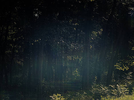 Hazy Woods 08202018 by Philip A Swiderski Jr