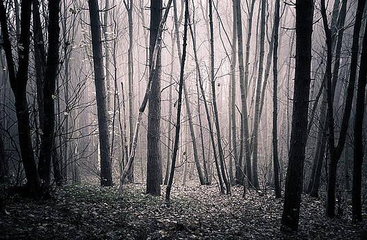 Svetlana Sewell - Hazy Woods