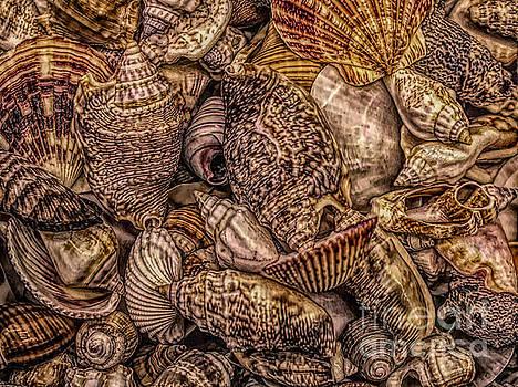 Paulette Thomas - Beautiful Shells