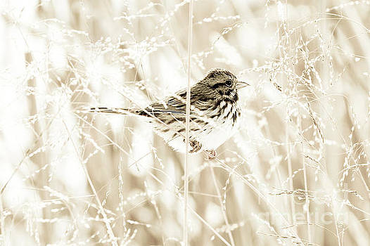 He Feeds the Sparrows by Anita Oakley