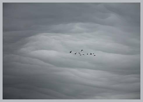 Heading Home by Mary Nash-Pyott