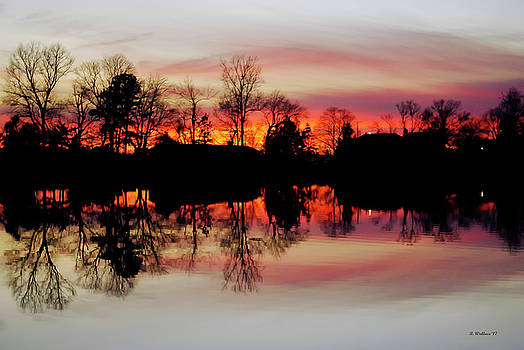 Hearns Pond Dusk Silhouette by Brian Wallace
