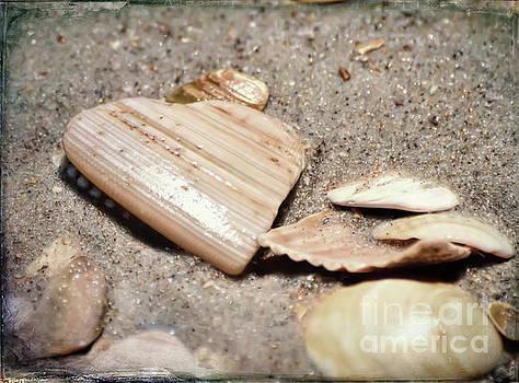 Heart In The Sand by Kerri Farley