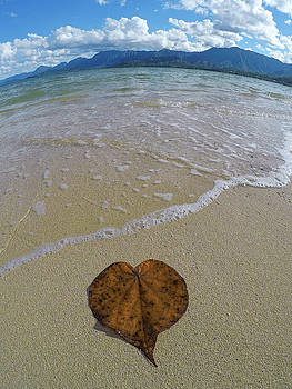 Heart Leaf by Megan Martens