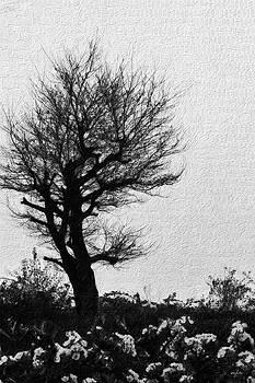 Nicole Frischlich - Heart of a tree