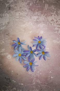 Heart of Daisies by Elvira Pinkhas