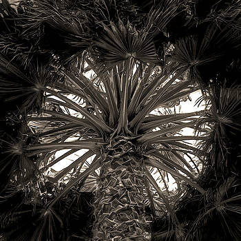 Heart of Palm by Richard Hinds