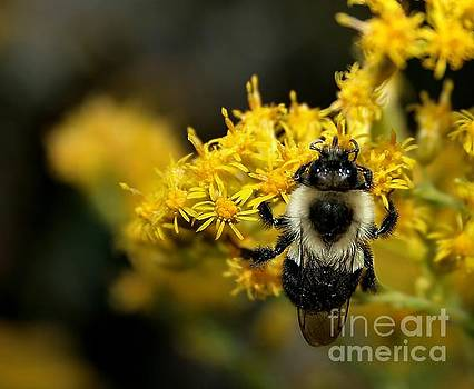 Heart of the Bee by Roger Becker