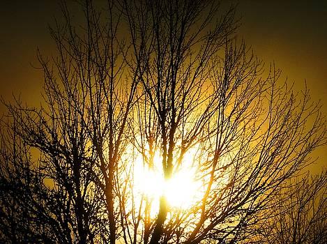 Heart Of The Sun by Chris Dunn