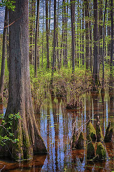 Susan Rissi Tregoning - Heart of the Swamp 2