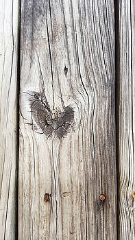 Heart of wood by Ami Brown