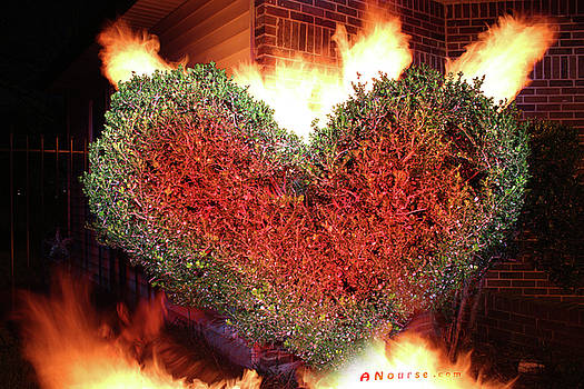 Heart Shrub by Andrew Nourse