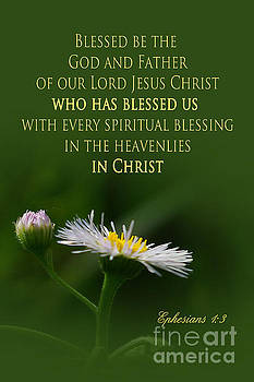 Heavenly Blessings in Christ by Robin Clifton