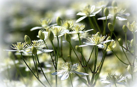 Heavenly Blooms by Rosanne Jordan