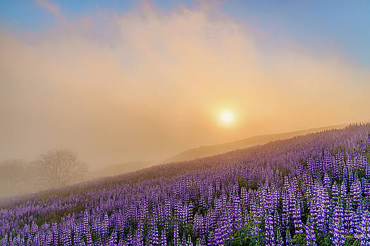 Heavenly Flora by Greg Mitchell Photography