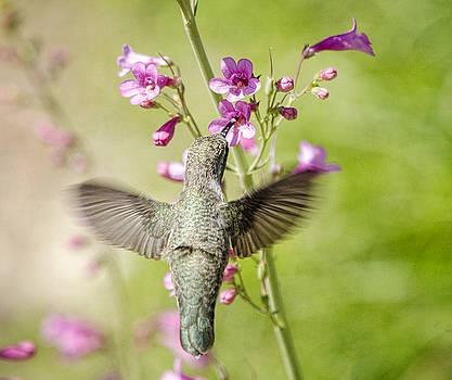 Saija  Lehtonen - Heavenly Wings