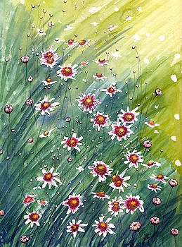 Coreopsis by Katherine Miller