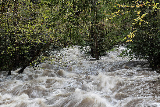 Heavy flooding on a river in the Great Smoky Mountains in autumn by Natalie Schorr