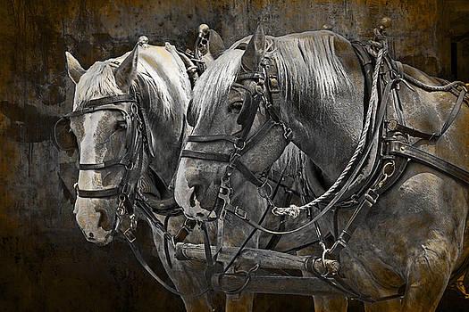 Randall Nyhof - Heavy Horses