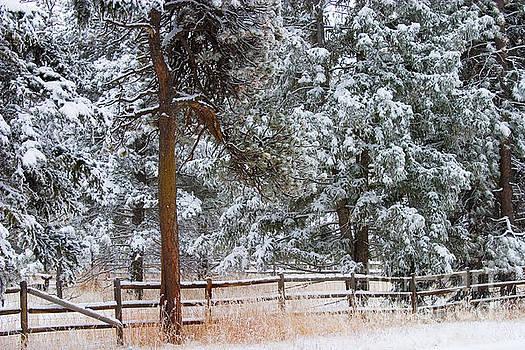 Steve Krull - Heavy Snow and a Winter Storm