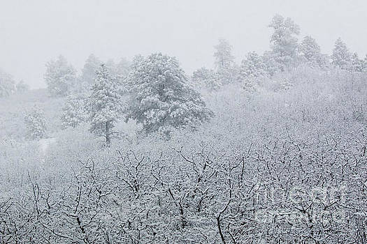 Steve Krull - Heavy Snow in the Pike National Forest of Colorado