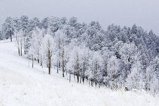 Steve Krull - Heavy Snow in the Pike National Forest